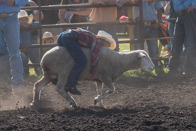 2016 rodeo friday mutton busting-2774