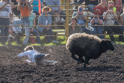 2016 rodeo friday mutton busting-2797 - Copy