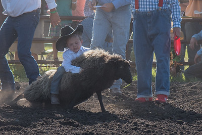 2016 rodeo friday mutton busting-2794 - Copy