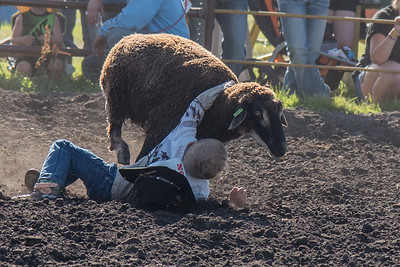 2016 rodeo friday mutton busting-2826 - Copy