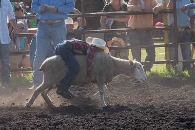 2016 rodeo friday mutton busting-2773