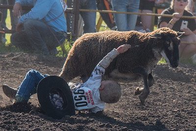 2016 rodeo friday mutton busting-2827 - Copy