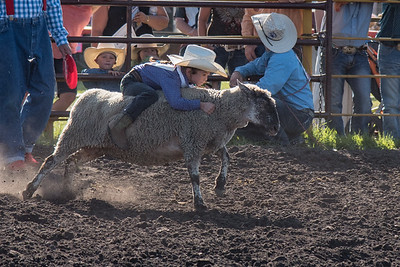 2016 rodeo friday mutton busting-2833 - Copy