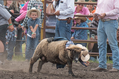 2016 rodeo saturday mutton busting-3912