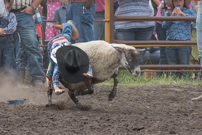 2016 rodeo saturday mutton busting-3909