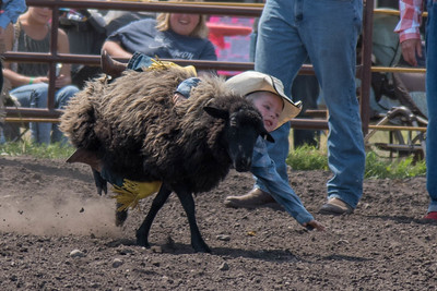 2016 rodeo sunday mutton busting-5009