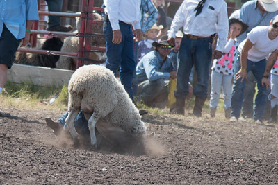 2016 rodeo sunday mutton busting-4987