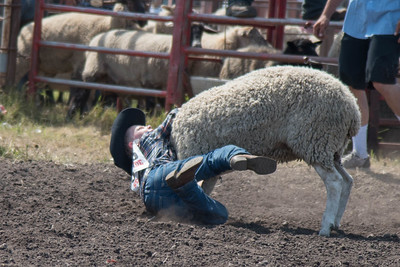 2016 rodeo sunday mutton busting-4986