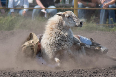 2016 rodeo sunday mutton busting-5026