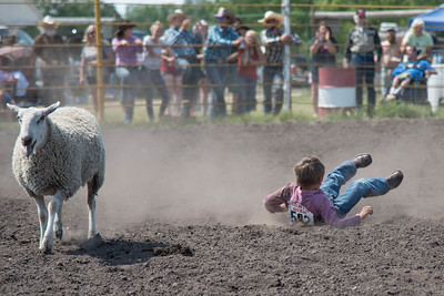 2016 rodeo sunday mutton busting-5003