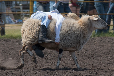 2016 rodeo sunday mutton busting-5021