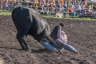 2016 rodeo friday steer wrestling-3123