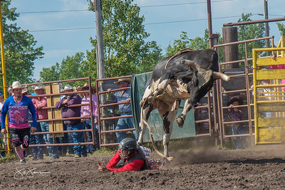 bulls_saturday_2017-3176
