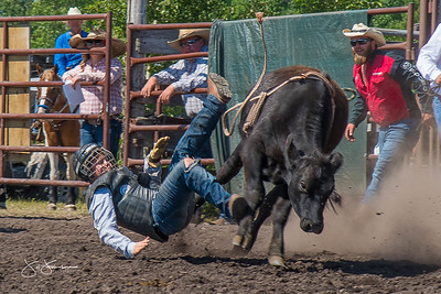 bulls_sunday_2017-4043
