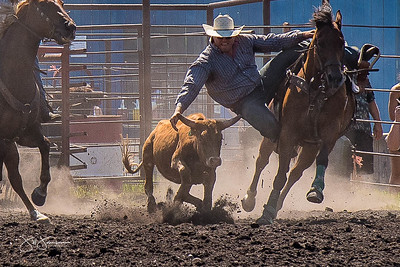steer_wrestling_sunday_2017-3960