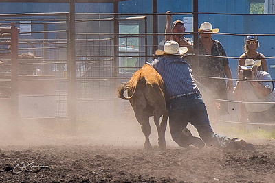 steer_wrestling_sunday_2017-3965