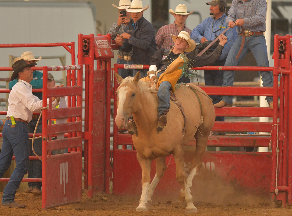 Justin Sheely | The Sheridan Press<br /> Local rodeo competitor Hunter Carlson rides bareback on Exotic Blond during the Sheridan WYO Rodeo Saturday at the Sheridan County Fairgrounds.