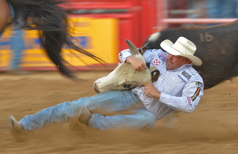 Justin Sheely | The Sheridan Press<br /> K.C. Jones of Decatur, Texas, takes one down in steer wrestling at the Sheridan WYO Rodeo Wednesday at the Sheridan County Fairgrounds.