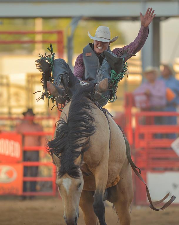 Justin Sheely   The Sheridan Press<br /> Dantan Bertsch of Saskatchewan, Canada, competes in bareback riding during the Sheridan WYO Rodeo Wednesday at the Sheridan County Fairgrounds.