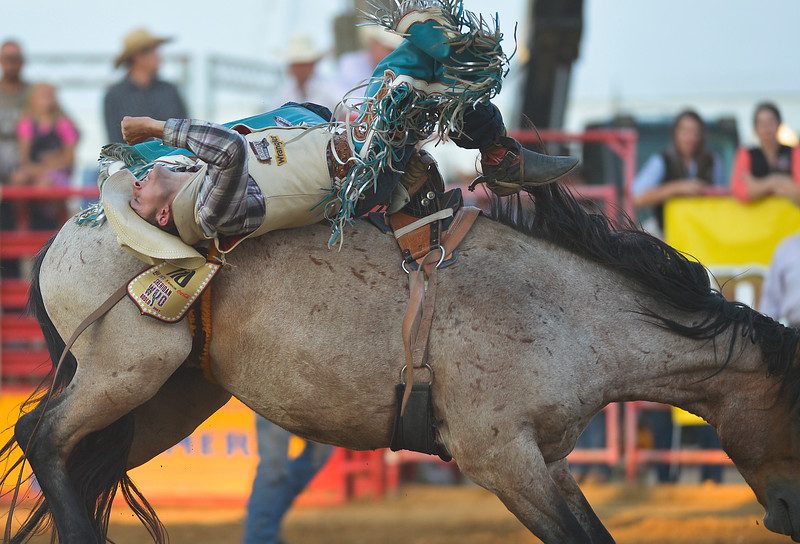 Justin Sheely | The Sheridan Press<br /> Zack Brown of Red Bluff, California, rides it out in bareback riding at the Sheridan WYO Rodeo Wednesday at the Sheridan County Fairgrounds.