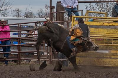 fp_benefit_bulls-6651