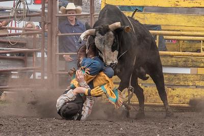 fp_benefit_bulls-6655