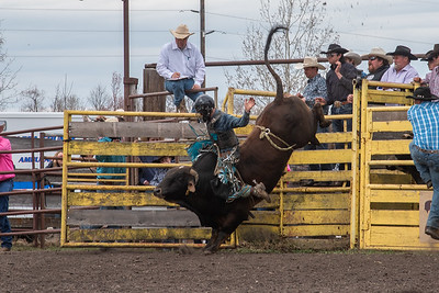 fp_benefit_bulls-6639