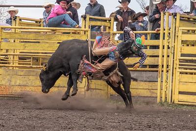 fp_benefit_bulls-6699