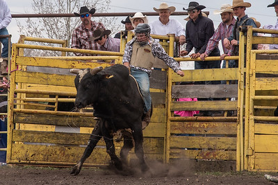 fp_benefit_bulls-6682