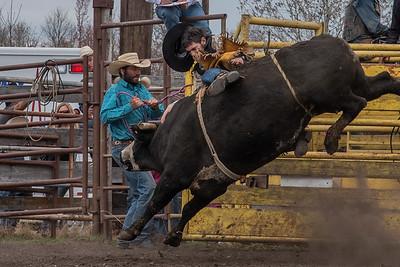 fp_benefit_bulls-6649