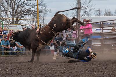 fp_benefit_bulls-6636