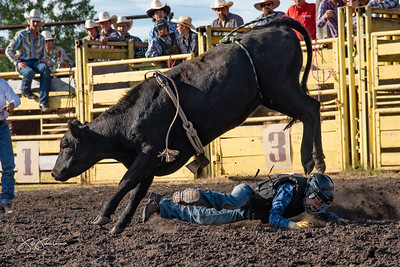 bulls_2018-1541