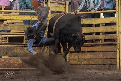 bulls_2018-2902