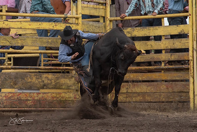 bulls_2018-2901