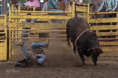 bulls_2018-2905