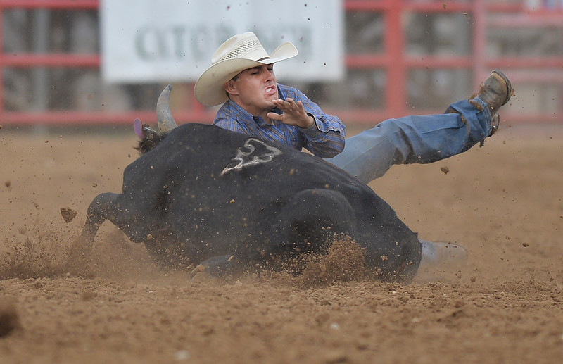 Justin Sheely | The Sheridan Press<br /> Dirk Tavenner of Rigby, Idaho, takes a spill in steer wrestling during the Sheridan WYO Rodeo at the Sheridan County Fairgrounds Wednesday, July 11, 2018.