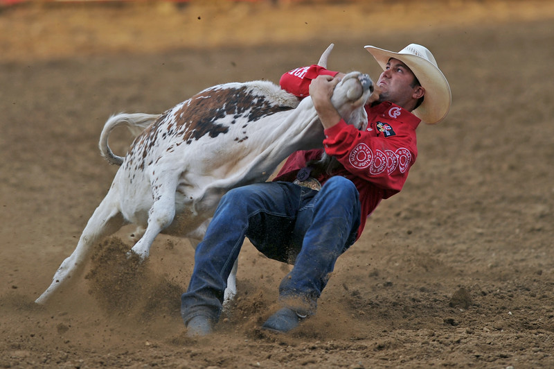 Mike Pruden | The Sheridan Press<br /> Tyler Waguespack spins his steer to the ground during the Sheridan WYO Rodeo at the Sheridan County Fairgrounds Wednesday, July 11, 2018.