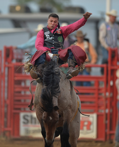 Justin Sheely | The Sheridan Press<br /> Caleb Bennett of Tremonton, Utah, competes in bareback riding in the first round of the Sheridan WYO Rodeo at the Sheridan County Fairgrounds Wednesday, July 11, 2018.