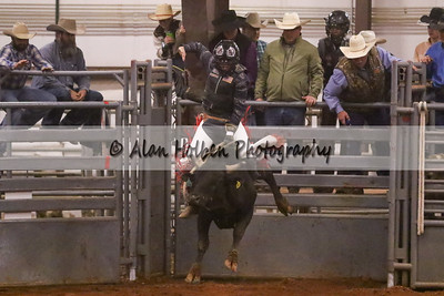 Bull Riding #50 (1 of 1)
