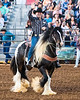 2019_June8_Jurupa Valley Rodeo_P2_Sheriff Chad Bianco_by Andrea Kaus-0326