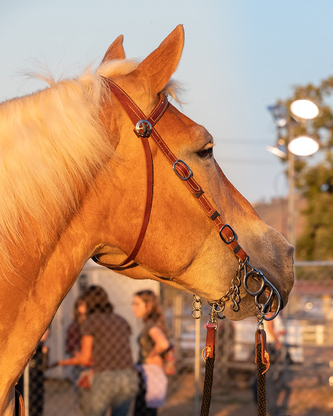 2019_June8_Jurupa Valley Rodeo-0155