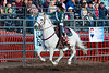 2019_May24_Valley Center Rodeo-0615