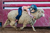 2019_May24_Valley Center Rodeo-0350