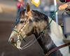 2019_Aug 10_Ventura County Fair Rodeo_P2_Escaramuza-2439