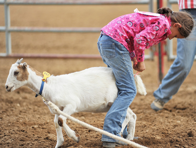 Louisa Sorenson pins a goat between her legs as she ties a ribbon in the Junior Goat Tail Tying event at the Sheridan County Rodeo Saturday afternoon. (Justin Sheely/The Sheridan Press)