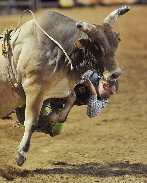 Kris Newman, of Casper, Wyo., falls off the bull after his helmet gets knocked off in Saturday's Bull Riding competition at the Sheridan-Wyo-Rodeo. (Justin Sheely/The Sheridan Press)