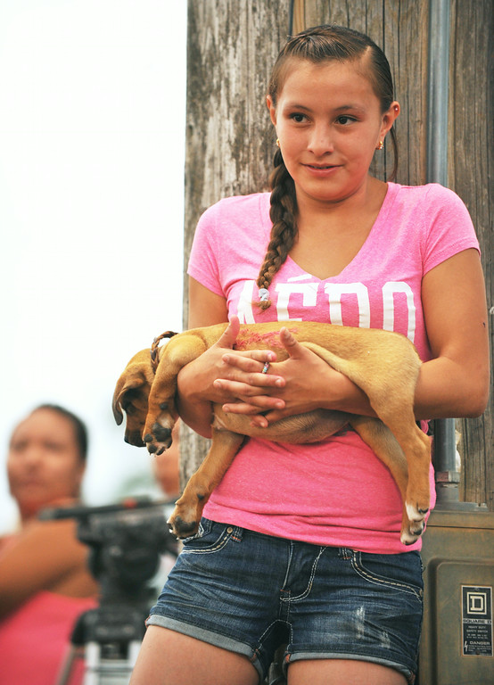 Seventeen-year-old Darwyna Bull Shows of Prior, Montana, holds her puppy as she watches the Indian Relay Racers enter the arena Friday night at the Sheridan County Fairgrounds.