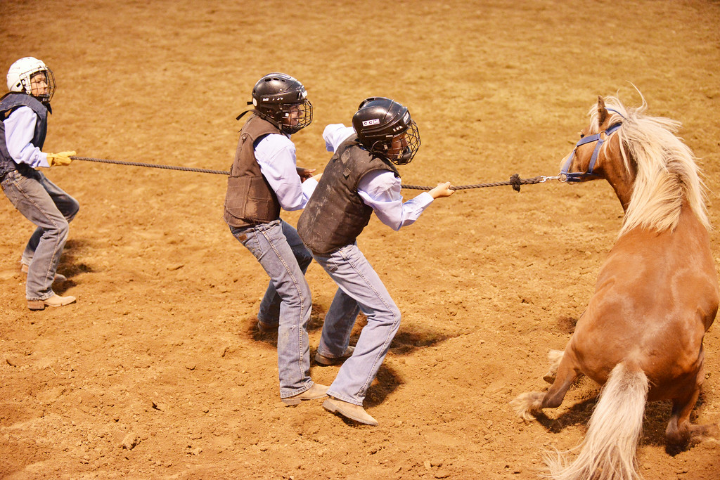 The kids pony team from Sheridan and Buffalo try to mug and ride a pony for the specialty act 'Wild Pony Races' during the Sheridan WYO Rodeo Wednesday night at the Sheridan County Fairgrounds arena. From left, Teegan Leno, Will Albrecht, and Clay Reiner. The Sheridan Press|Justin Sheely.