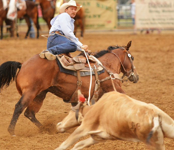 Stetson Vest competes in tie down roping during the Sheridan WYO Rodeo Wednesday night at the Sheridan County Fairgrounds arena. The Sheridan Press Justin Sheely.