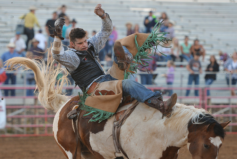 Justin Sheely | The Sheridan Press<br /> Coleman Harbaugh's rides proves to be too much in the bareback riding event during the Sheridan County Rodeo Friday evening at the Sheridan County Fairgrounds. Performances continue Saturday at 1 p.m. and 7p.m. and Sunday at 1 p.m.